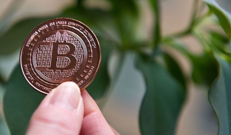 Bitcoin's richest REVEALED!