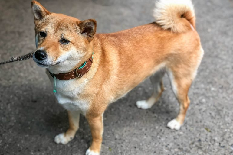 Robinhood Adds Dogecoin [DOGE] Support Amidst Market Surge 19