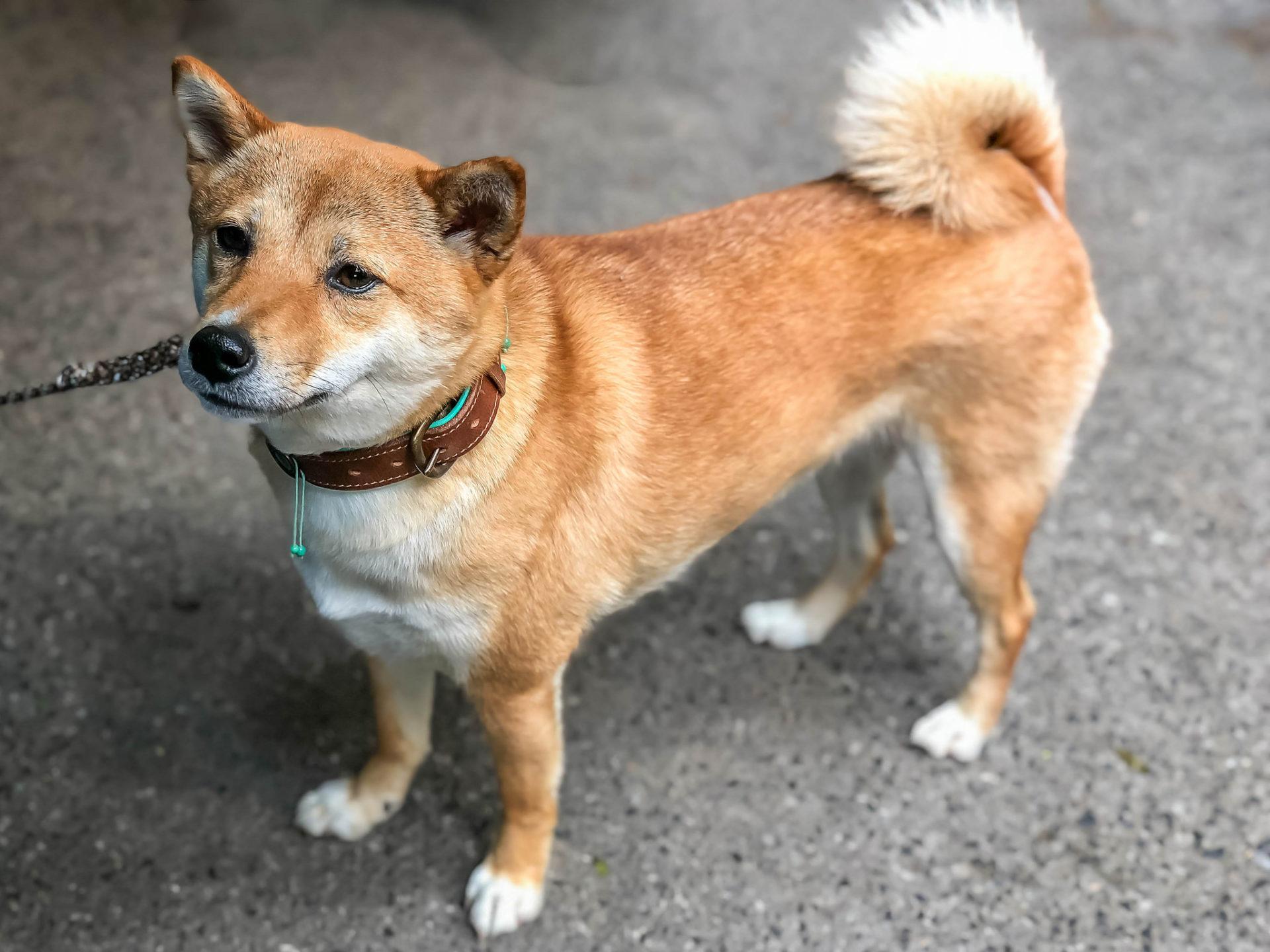 Robinhood Adds Dogecoin [DOGE] Support Amidst Market Surge 13