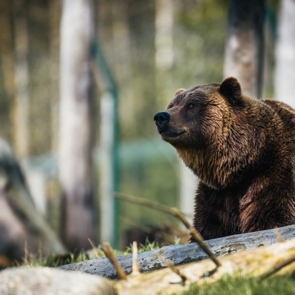 Prominent Investor: This Bitcoin Bear Season May Last For A While 15