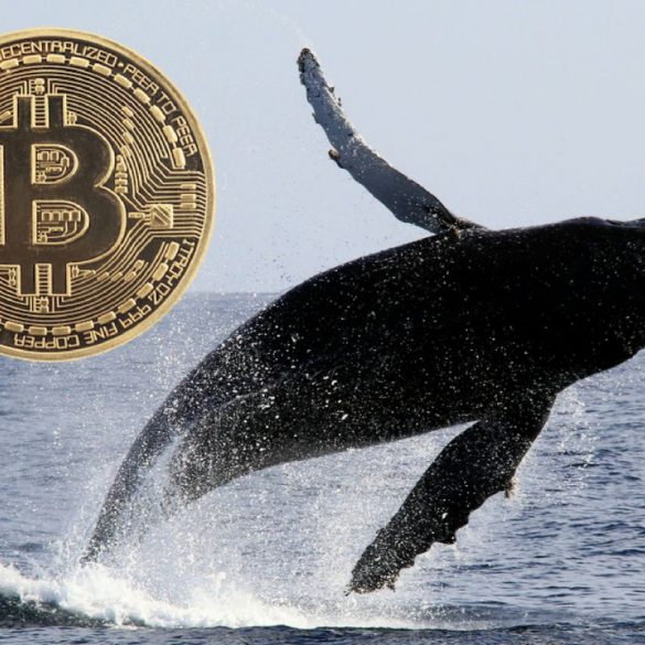 Whales On The Move: Somebody Just Transferred $193 Million Worth Of Bitcoins From A Billion-Dollar Wallet 13