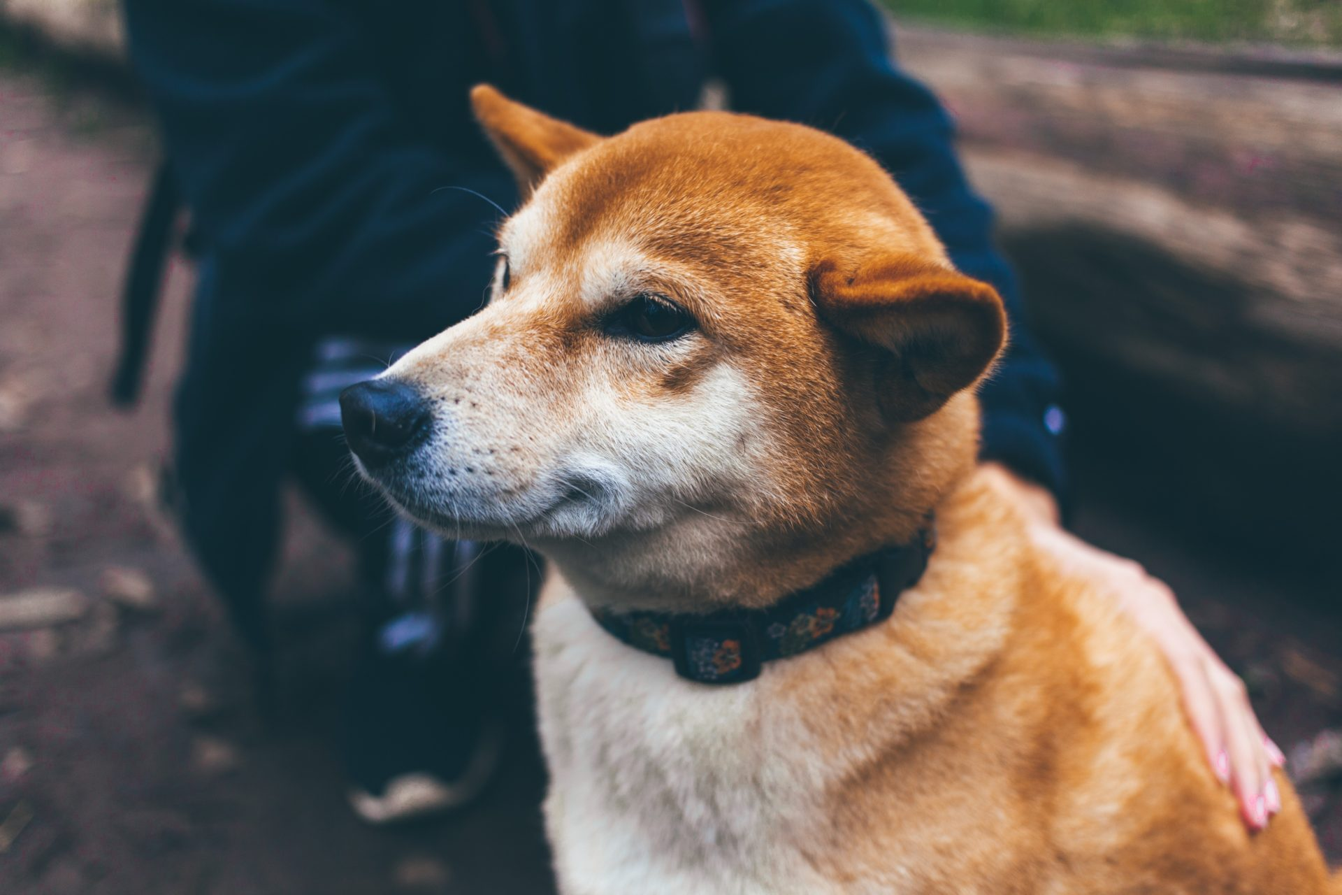 Dogecoin (DOGE) Defies Red Market, Posts Slight Gain 13