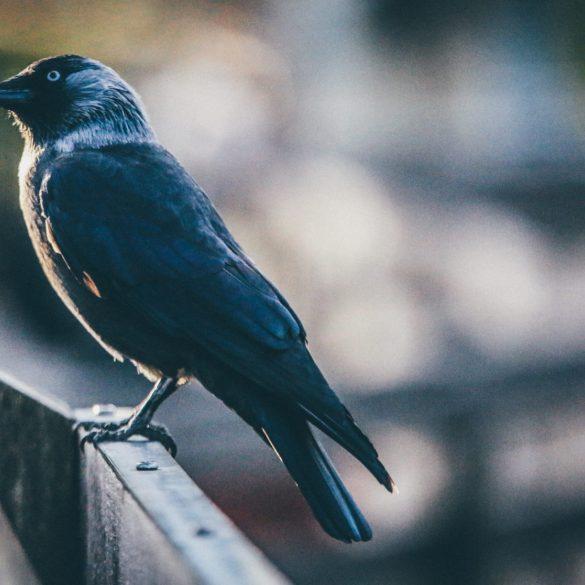 Ravencoin (RVN) Continues Surge, Up 200% Since Binance News 13