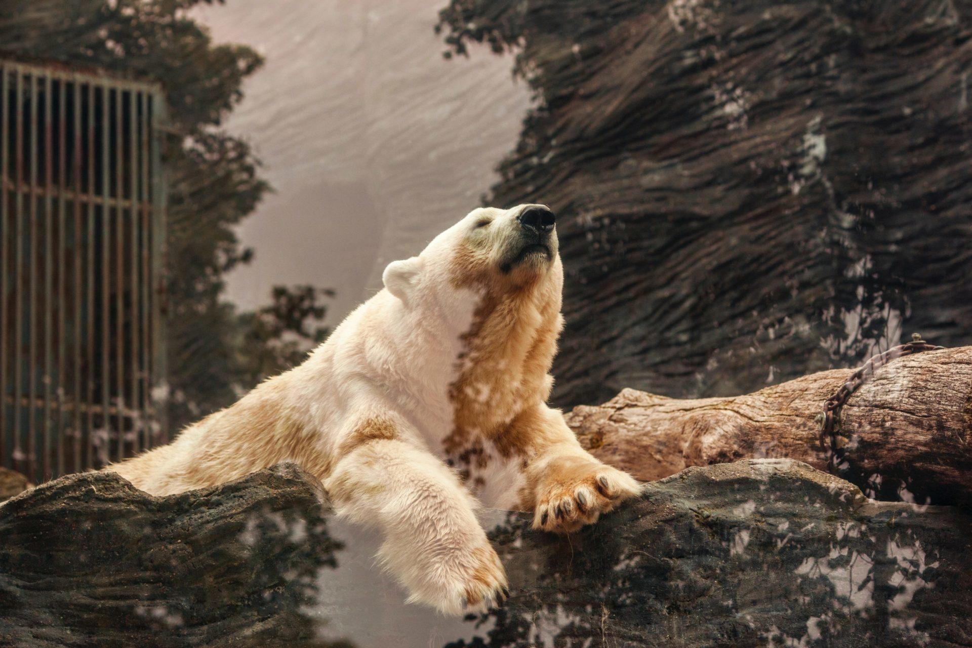 Short-Term Bitcoin Bear Doubles Down On BTC at $3,700 Call 13