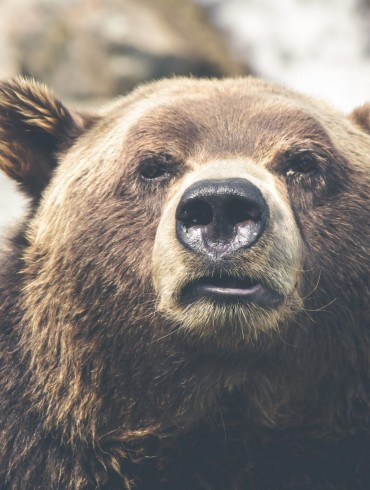 Crypto Analyst: Buy The Dips, Bear Market Definitely Over 16