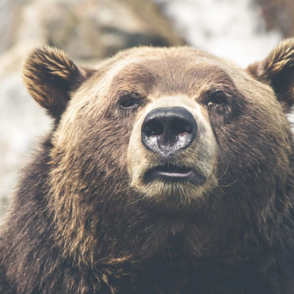 Bitcoin (BTC) Bear Market Isn't Over? Industry Analysts Duke It Out 14