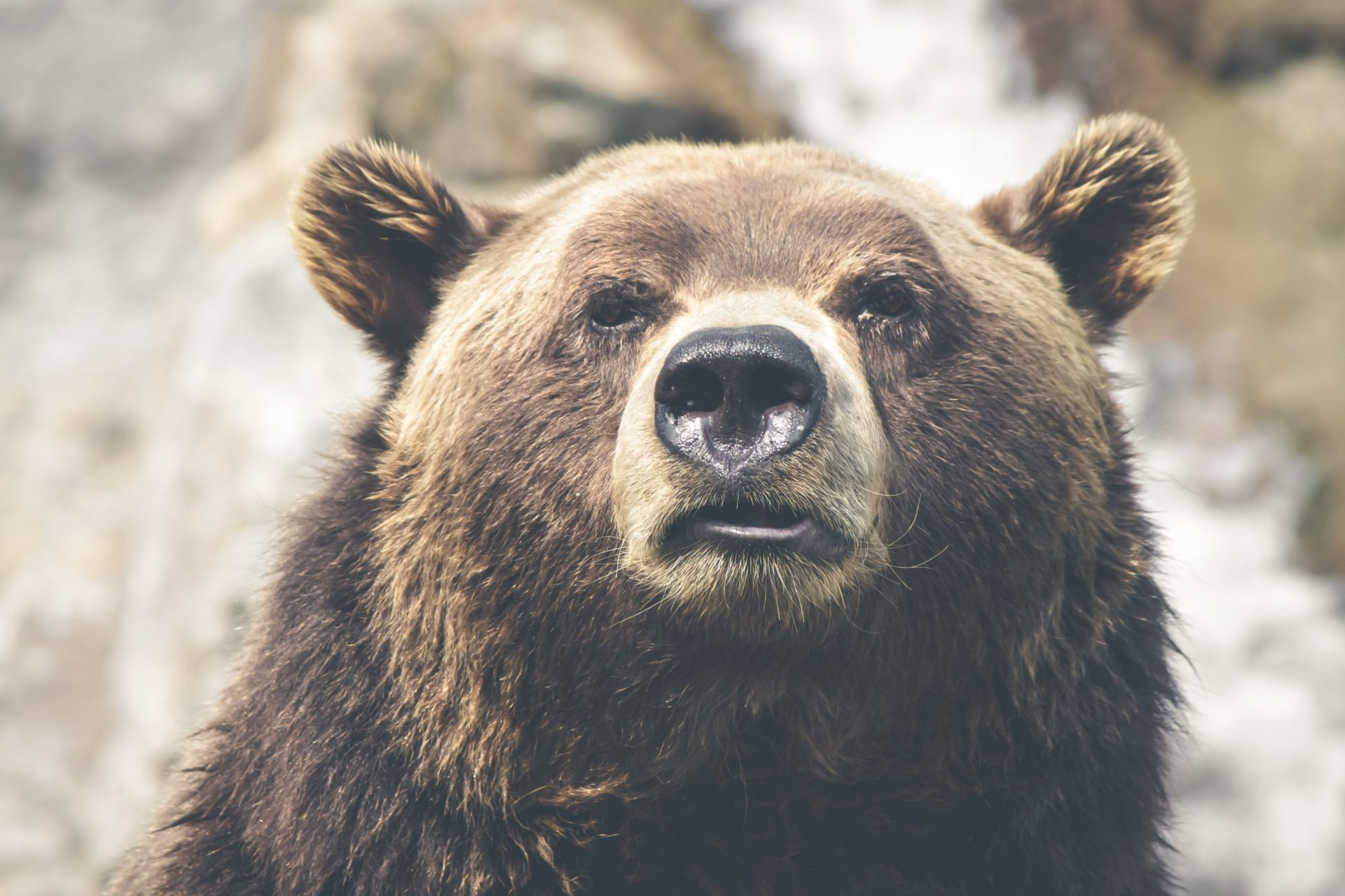 Short-Term Bitcoin Bear: HODLers To Be Decimated By BTC Dump To $2,000 13