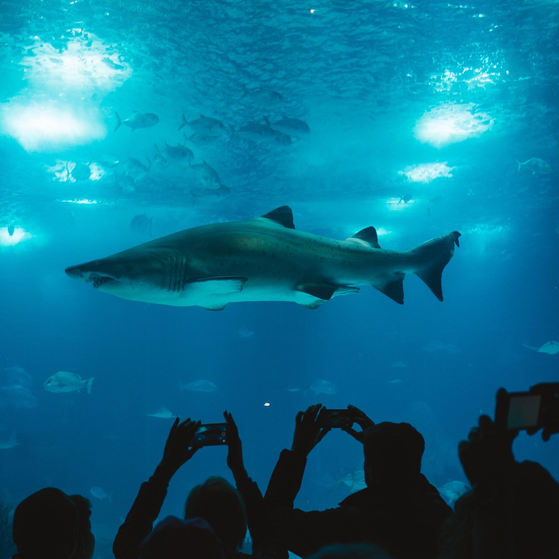 Shark Tank Kevin O'Leary Bitcoin